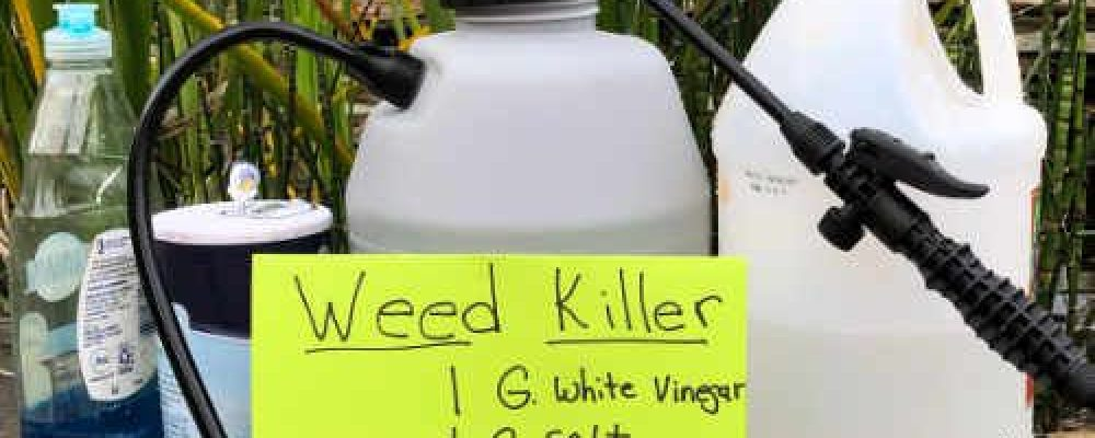 How to Kill Weed With Vinegar
